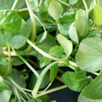 watercress-high in Vitamin B1